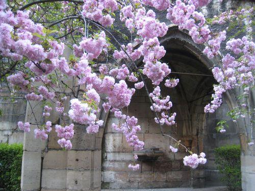 Le printemps est arriv d core ta maison id es de for Idee jardin fleuri