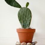 Décoration cactus