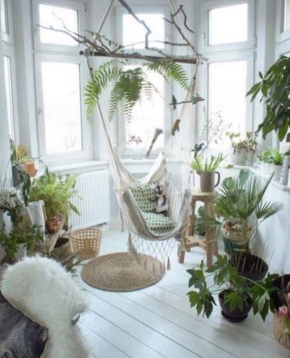 Décoration plantes